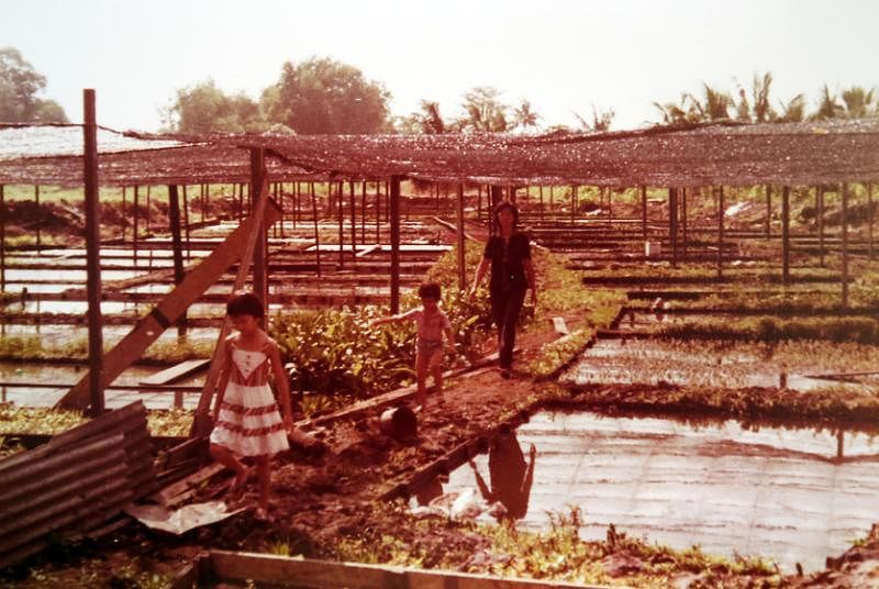 陈淑芬(左一)小时候便在惹兰加由的农场里玩耍、帮手。(受访者提供)