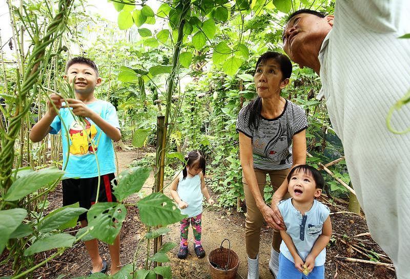 孙子孙女们都在农场长大,从小便跟着阿公阿嬷熟悉作物。