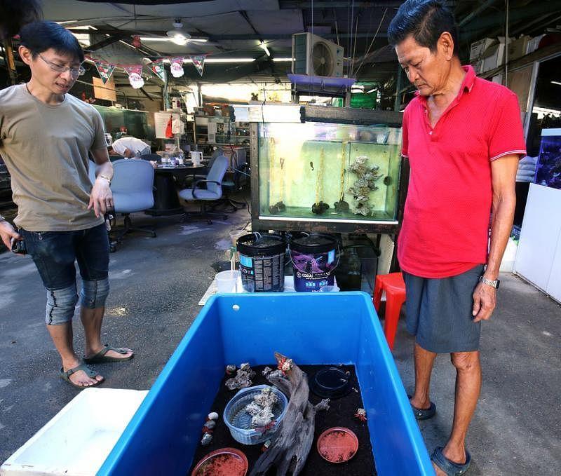李晋伟(左)在陈江平的农场负责管理3000多种水生物。