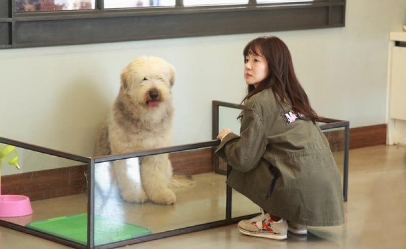 270218_lifestyle_dogs3_Medium.jpg