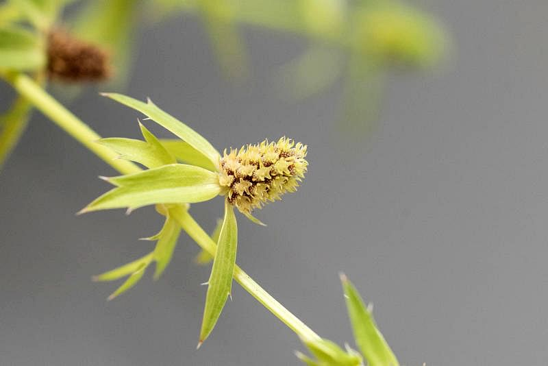 许多小花组成的花序。