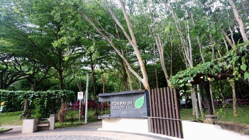 大巴窑感官公园。