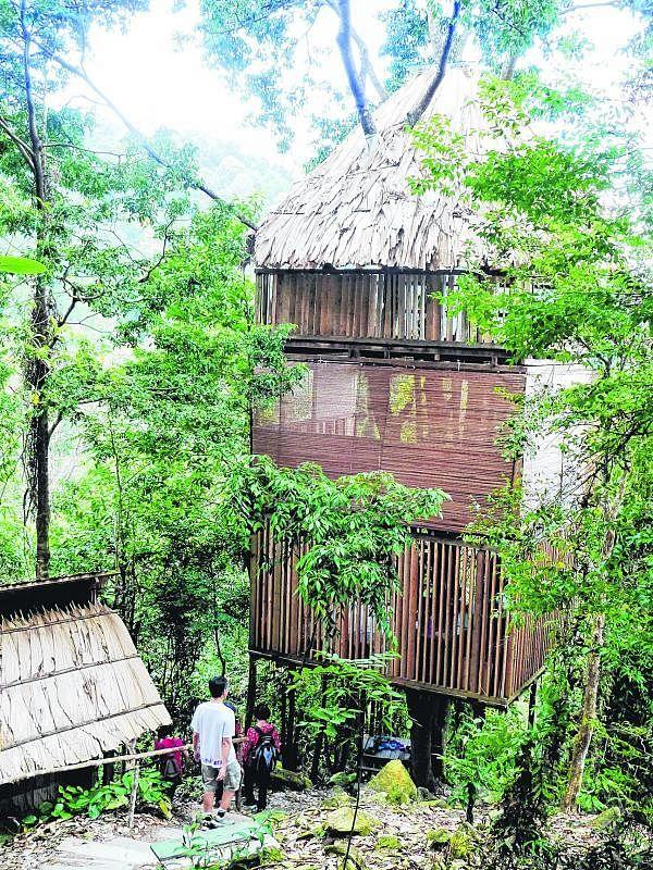 倚着雨林中的树木而筑的树屋。