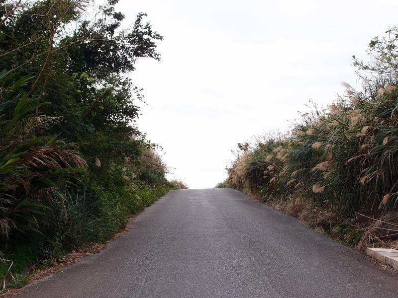 农地两旁小路甘蔗花随风摇曳,看似芦苇。