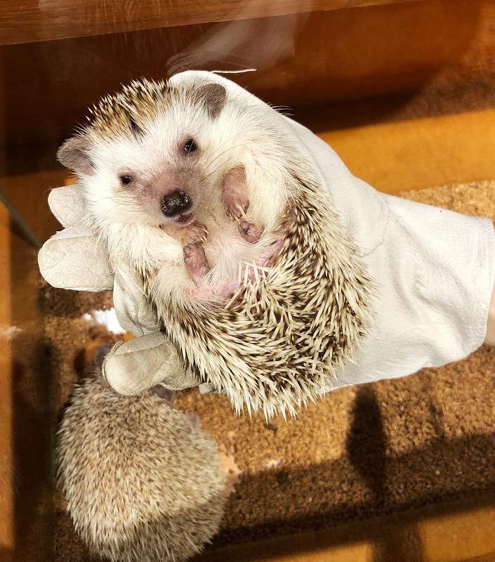 hedgehog2_Large.jpg
