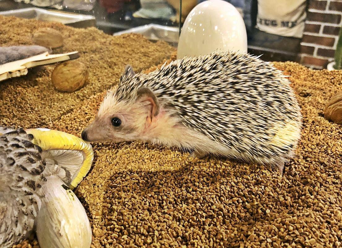 hedgehog_Large.jpg