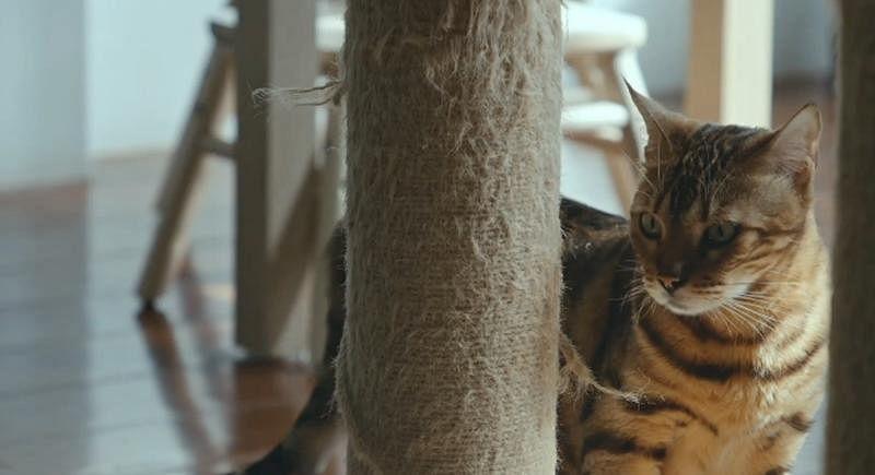 cat2_Medium.jpg